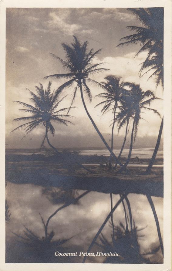 Coconut Palms, Honolulu, Ansichtskarte, 1931